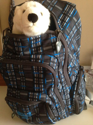 Im Rucksack fühlt Ole sich auch sehr wohl.