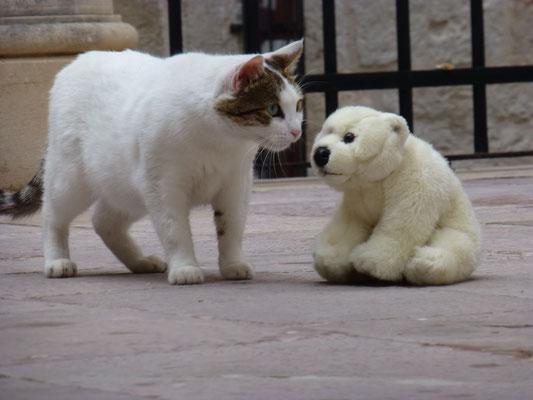 Diese Katze kommt auch ganz vorsichtig zu Ole.