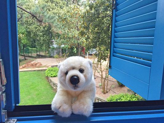 Ole will raus und sitzt schon auf der Fensterbank im Hotel auf der Insel Krk