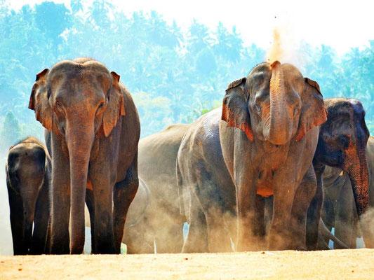 Pacchetto Vacanza in Sri Lanka. Safari con gli elefanti a Udawalawa National Park