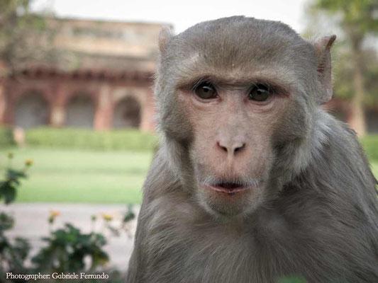 Agra. Taj Mahal. Photo by Gabriele Ferrando (LA MIA ASIA)