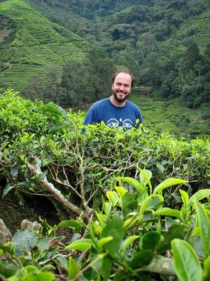 Passeggiata tra le piantagioni di Tè a Cameron Highlands