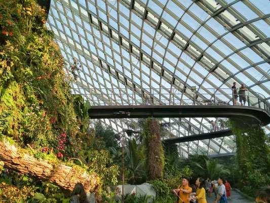Cloud Forest a Singapore (Photo by Gabriele Ferrando - LA MIA ASIA)