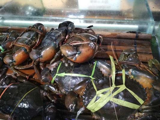 Dove mangiare a Jakarta. Bandar Djakarta (Photo by Gabriele Ferrando - LA MIA ASIA)