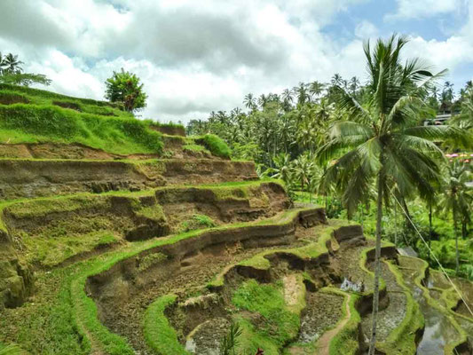 Tegalalang Rice Terrace ad Ubud - BALI (Photo by Gabriele Ferrando - LA MIA ASIA)