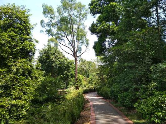Il parco del SINGAPORE Botanic Garden (Photo by Gabriele Ferrando - LA MIA ASIA)