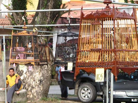 La gara di canto degli uccelli a Kota Bharu, Malesia (Photo by Gabriele Ferrando - LA MIA ASIA)