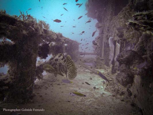 Immersione a Mabul, Cernia (Photo by Gabriele Ferrando - LA MIA ASIA)