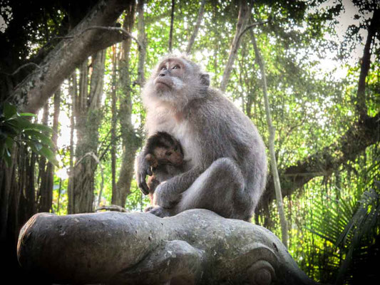 Monkey Forest Ubud (Photo by Gabriele Ferrando - LA MIA ASIA)