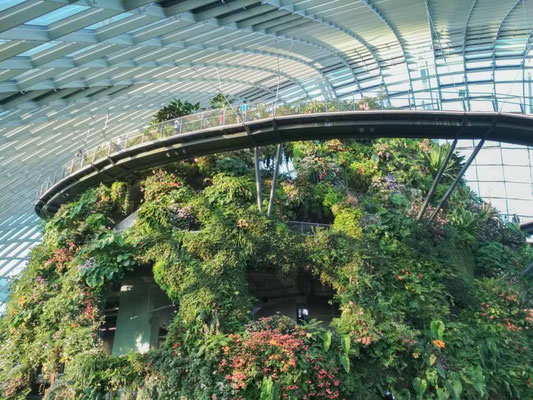 La Cloud Forest a Singapore (Photo by Gabriele Ferrando - LA MIA ASIA)