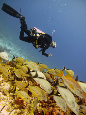 Diving in Cozumel - MESSICO