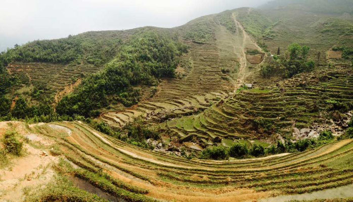 Vietnam. Terrazze di riso a Sapa. (Photo by Gabriele Ferrando - LA MIA ASIA)