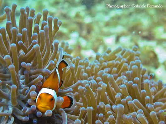 Immersione a Komodo (Photo by Gabriele Ferrando - LA MIA ASIA)