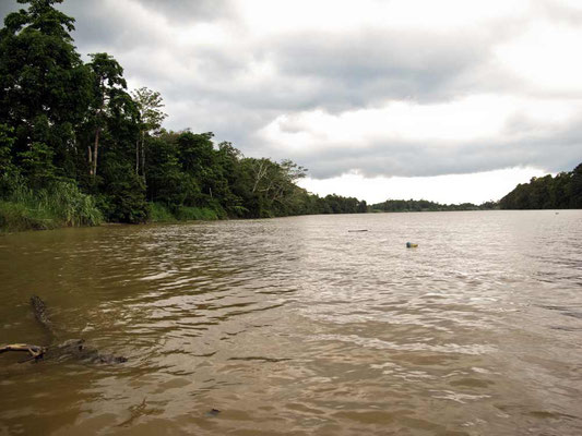 Kinabatangan River (Photo by Gabriele Ferrando - LA MIA ASIA)