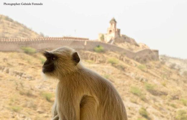 Amber Fort a Jaipur - India (Photo by Gabriele Ferrando - LA MIA ASIA)