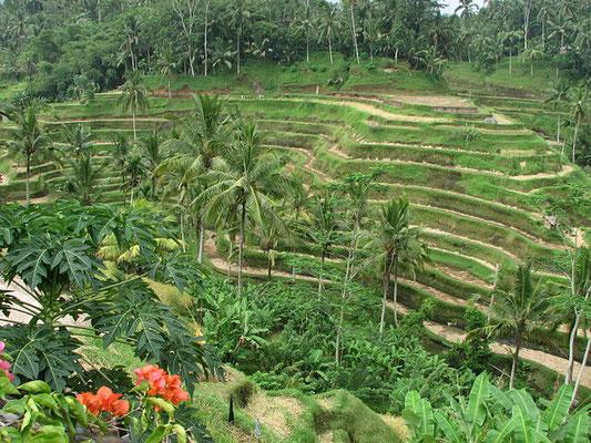 Terrazze di riso di Tegalalang a Bali