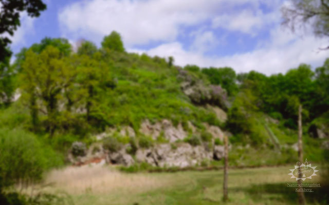 Lüneburg - Naturschutzgebiet Kalkberg