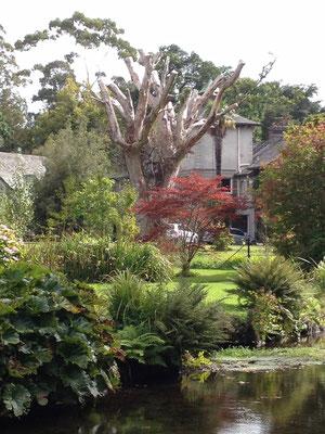Auch abgestorbene Baumriesen haben ihren ökologischen Platz im Garten
