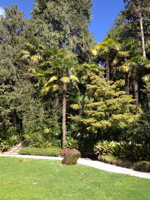 Gartenansicht mit Hanfpalmen