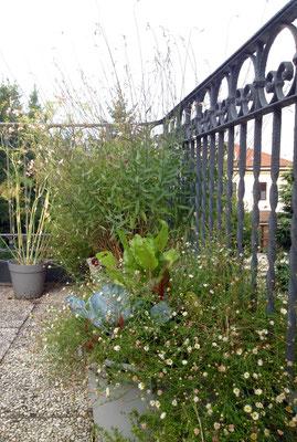 Viele Töpfe machen einen Garten