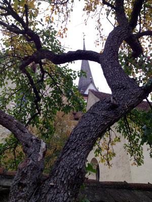 Kirchenansicht durch Birnbaum
