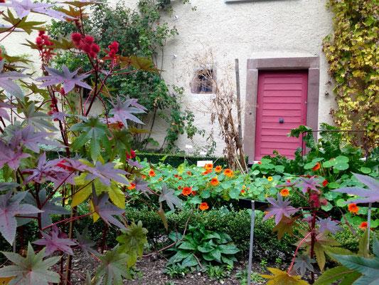 Auch im Herbst ein farbenfroher Blickfang: Rizinus und Kapuzinerkresse