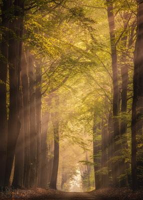 Zonneharpen door de Beukenlaan ( Mei 2019) Odoorn, Drenthe