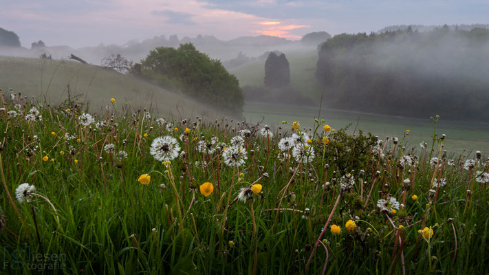 Een sfeervolle zonsopgang in de Eifel (mei 2019) Eifel, Duitsland