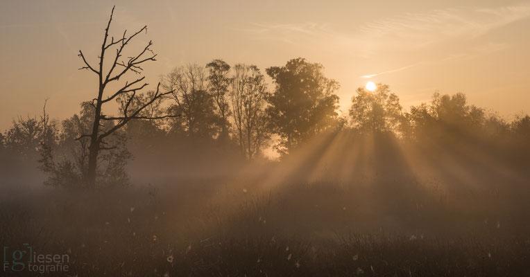 Een mistige ochtend op het Bargerveen ( oktober 2018) Zwartemeer, Drenthe