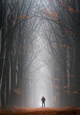 Een mooie beukenlaan gehuld in mist (december 2018) Odoorn, Drenthe