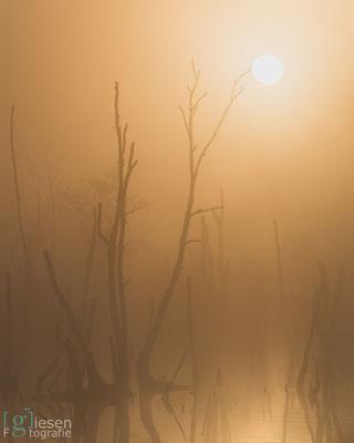 Een mistige zonsopgang (augustus, 2018) Klazienaveen-Noord, Drenthe