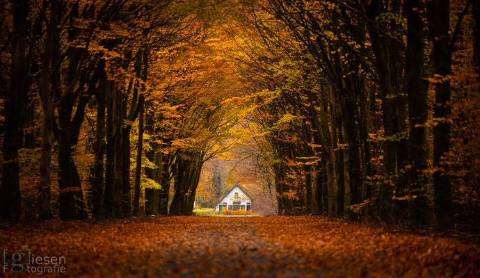 Het bekende witte huisje aan het einde van een Beukenlaan (november 2018) Odoorn, Drenthe