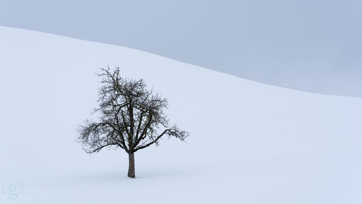 """De sprookjesachtige """"Drumlins""""met de fotogenieke bomen op de toppen (januari 2019) Neuheim, Zwitserland"""