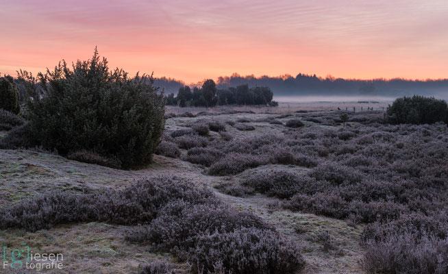 Een ochtend om niet snel te vergeten. Het Mantingerveld prachtig bedekt in een laag rijp (februari 2018) Mantinge, Drenthe