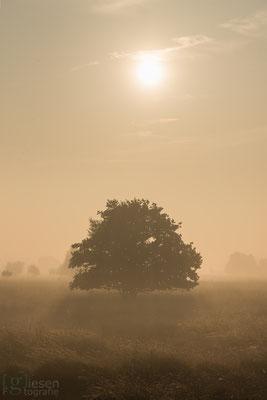 Een mistige zonsopgang op het Bargerveen (oktober, 2018) Zwartemeer, Drenthe