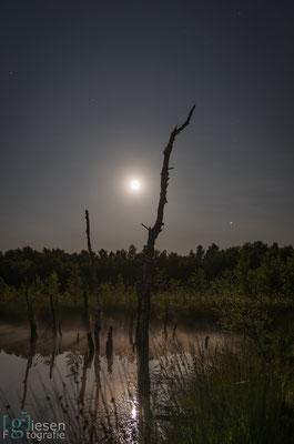 De volle maan die een prachtig stukje natuur verlicht (juli 2018) Klazienaveen, Drenthe