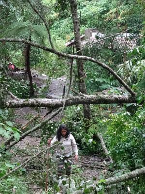 schon 3 riesige Bäume hat der Sturm in der Nähe des ersten Gebäudes entwurzelt...