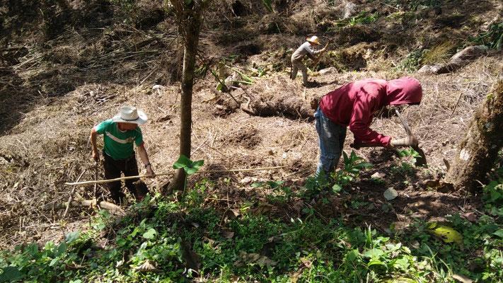 porf fin las plantamos en nov. 2016 / we finally plant the blueberry plants!