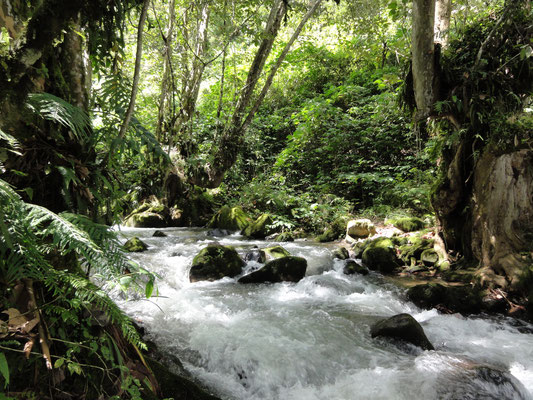 Fluss / River / Río  San Lorenzo