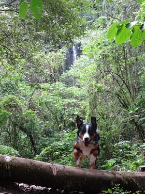 Odila unter dem ersten Wasserfall / abajo de la 1ra cascada...