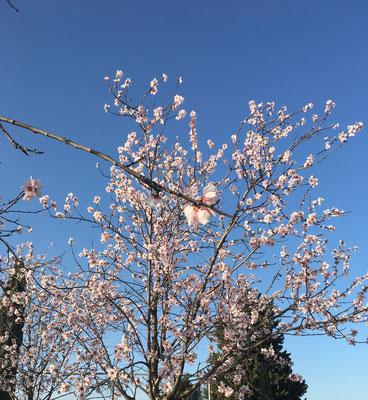 Darum ist im März in Rom so schön!