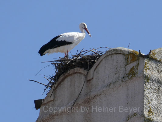 Storch / Tiere 6