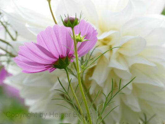 Blumen und Blüten 23