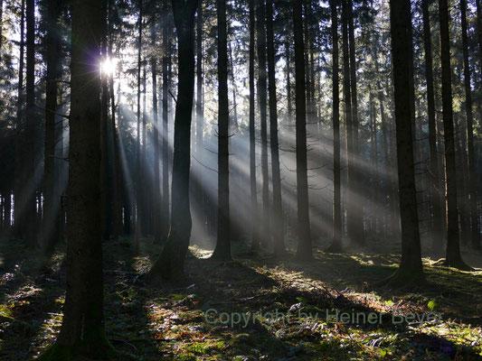 Morgens im Wald / Lichtspiele 1
