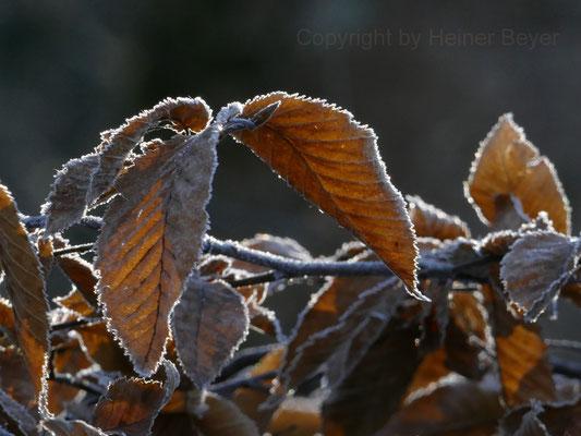 Erster Frost / Jahreszeiten 37