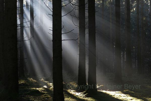 Morgens im Wald / Lichtspiele 2