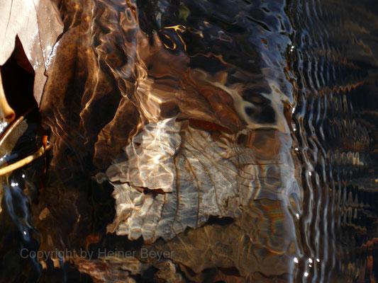 Staublätter / Wasser 22