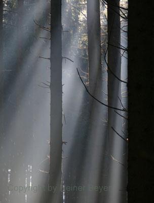 Morgens im Wald / Lichtspiele 3
