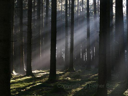 Morgens im Wald / Lichtspiele 4