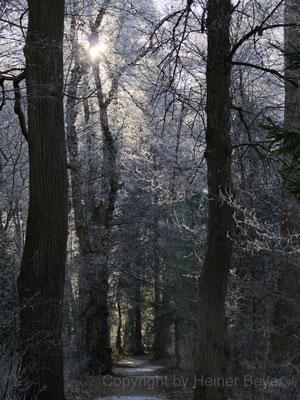 Im Landsberger Englischen Garten / Jahreszeiten 39